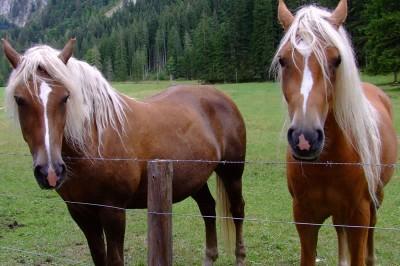 Pferde, Tier Versicherungen